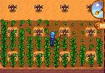 《星露谷物语》稀有种子用法 种子使用技巧