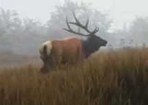 猎人:野性的呼唤全新预告视频欣赏 重回原始时代